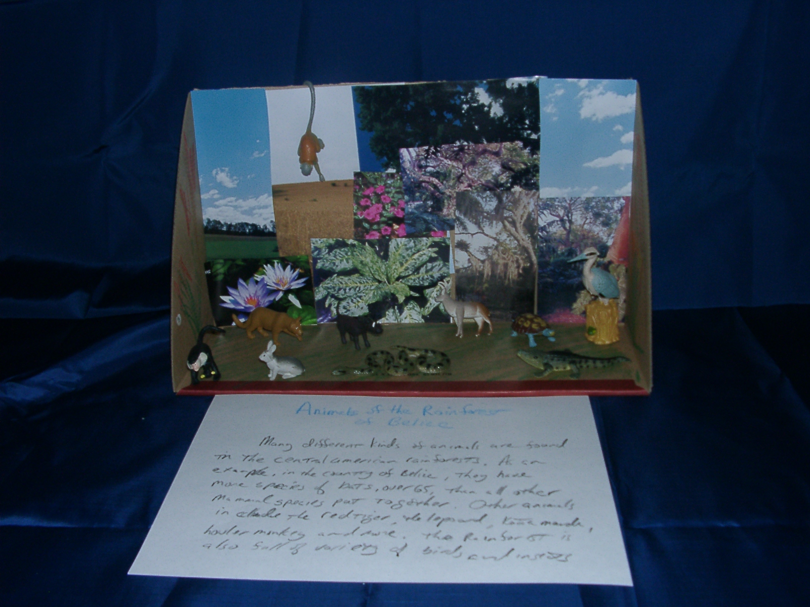 shoebox diorama book report